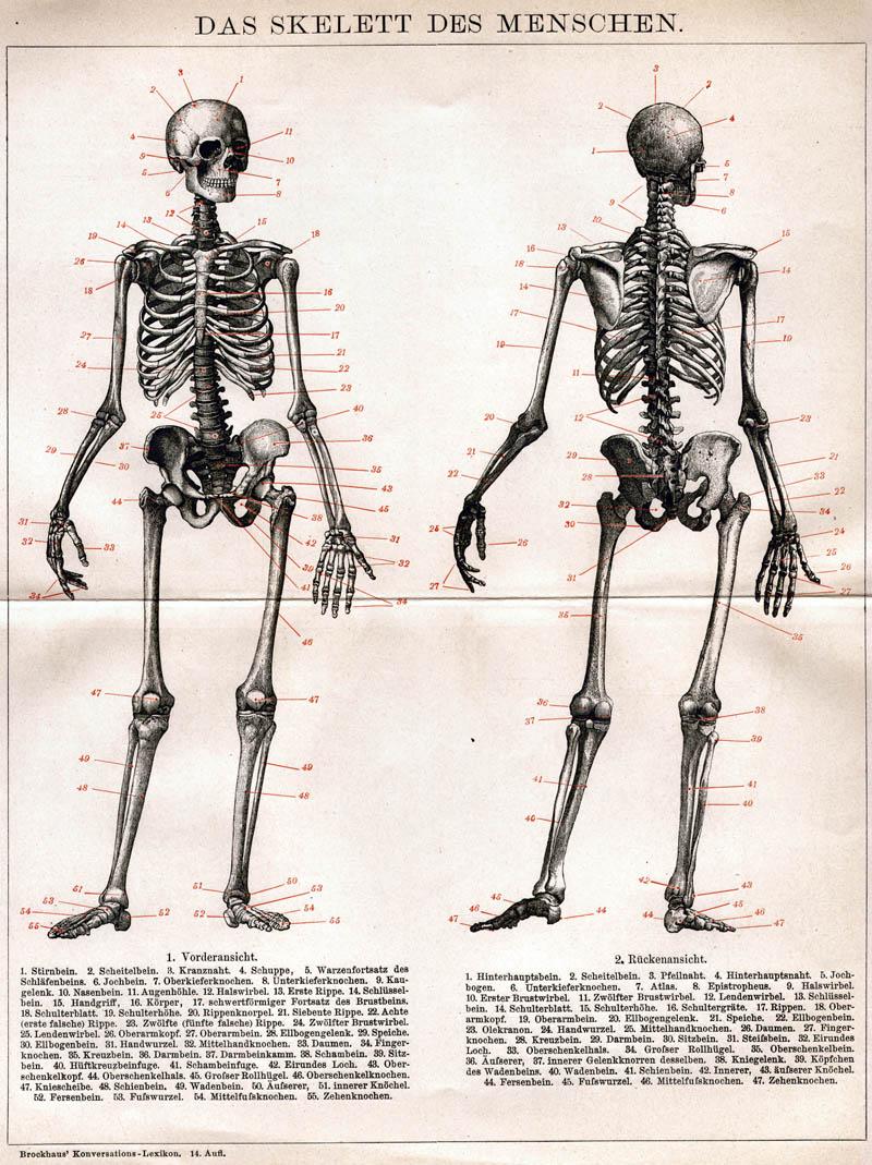 retro bib seite aus brockhaus konversationslexikon das skelett des menschen. Black Bedroom Furniture Sets. Home Design Ideas