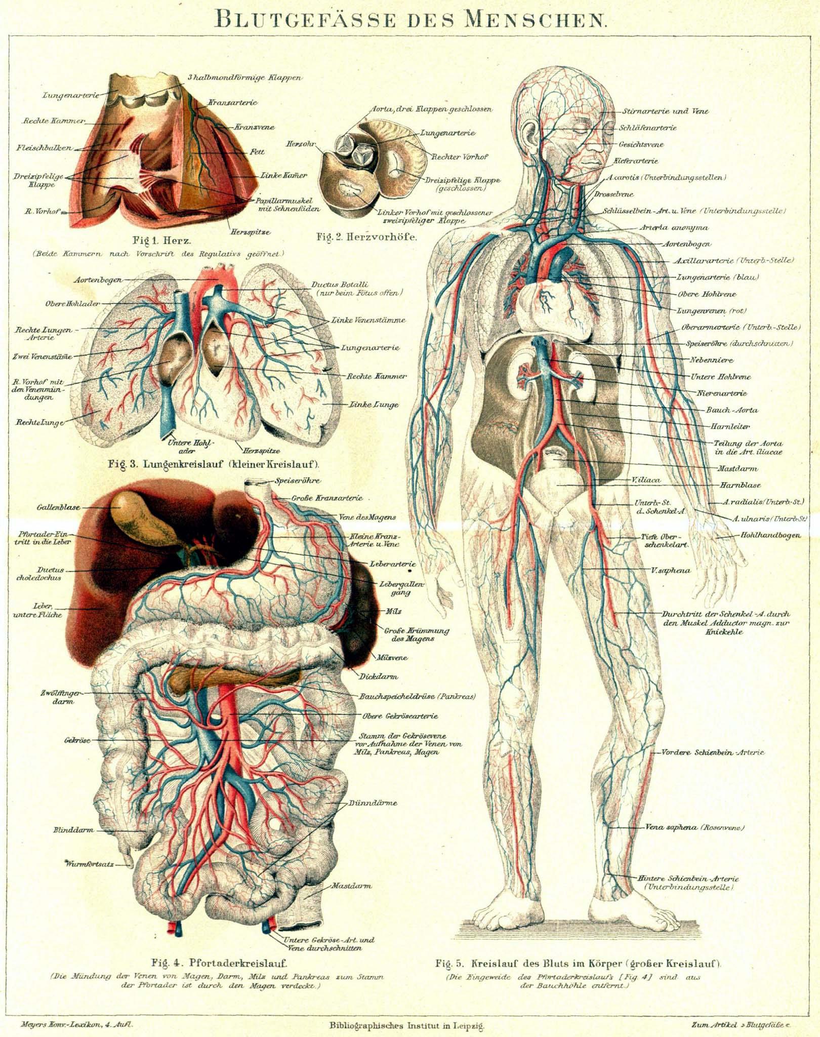 Erfreut Linke Seite Körperanatomie Galerie - Anatomie Ideen ...